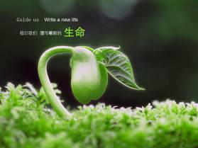 美丽绿色大自然PPT背景图片